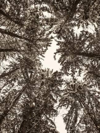 Wald von Kurt Tropper