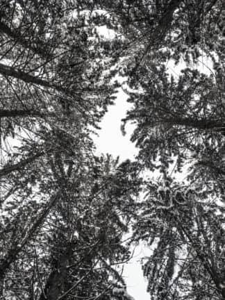 Wald 01 Tropper Kurt